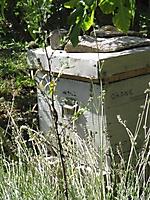 Orane, une de mes ruches
