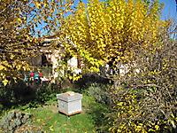 Apiculture - Faune du jardin