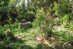 en-cheminant-dans-mon-jardin-vous-irez-de-surprise-en-surprise-il-y-a-meme-des-haltes-pour-rever-1-20151207-2071389896593B1CB3-8A73-15B7-830E-1F4E22155135.jpg